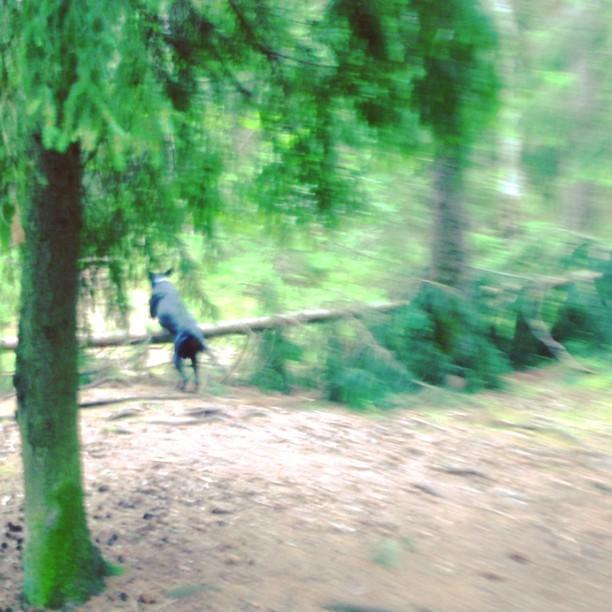 Walking my dog Leon