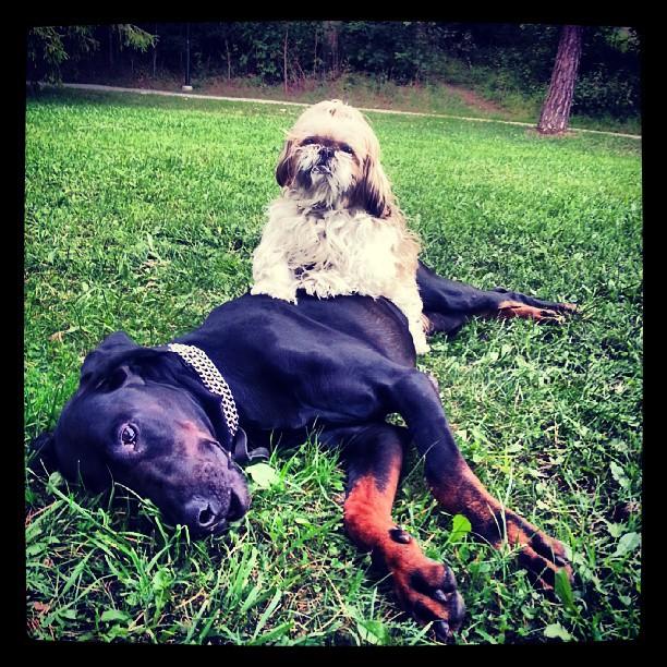 Best friends #dobermann #leon