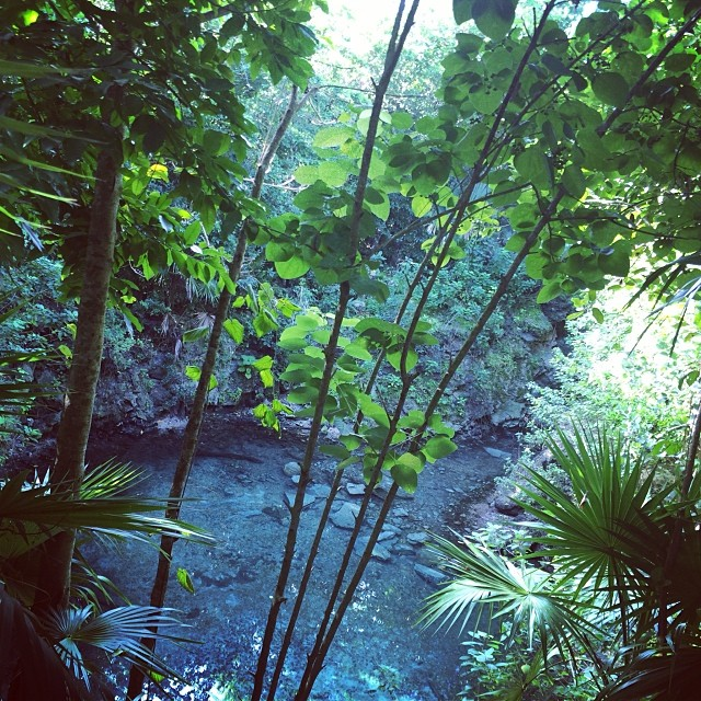 Cenote & Dolphine Time