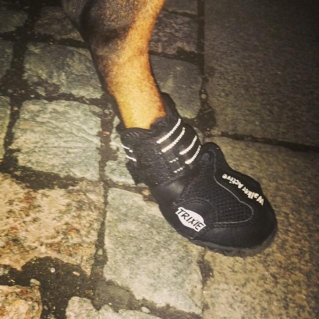 Thanks Daddy ;) now i wont slip around :) #dobbis #dobermann