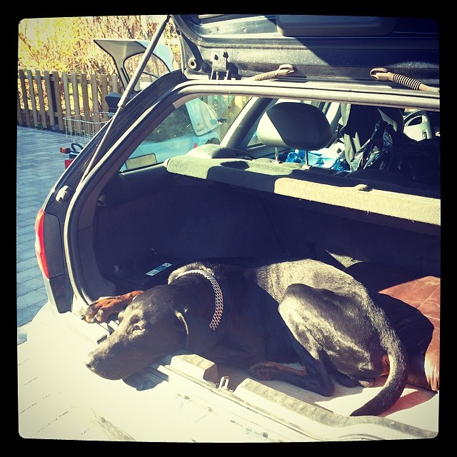 Are U coming or what ?! #dobermann
