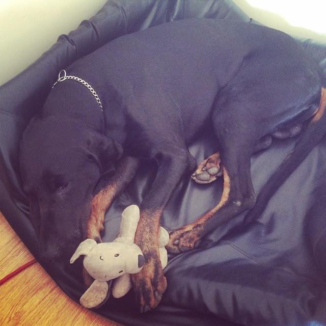 Han är morgontrött! #leonlopez