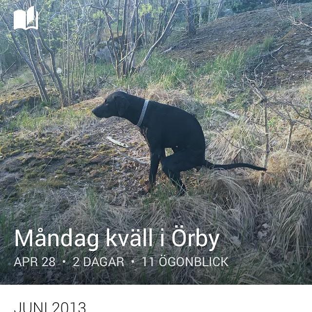 Ursäkta, men ios8 gör egna samlingsalbum och namnger som själv!  O vips Leon bajsar! Topic - måndagkväll i Örby . Jag dör , hahahah #fekke #fekal