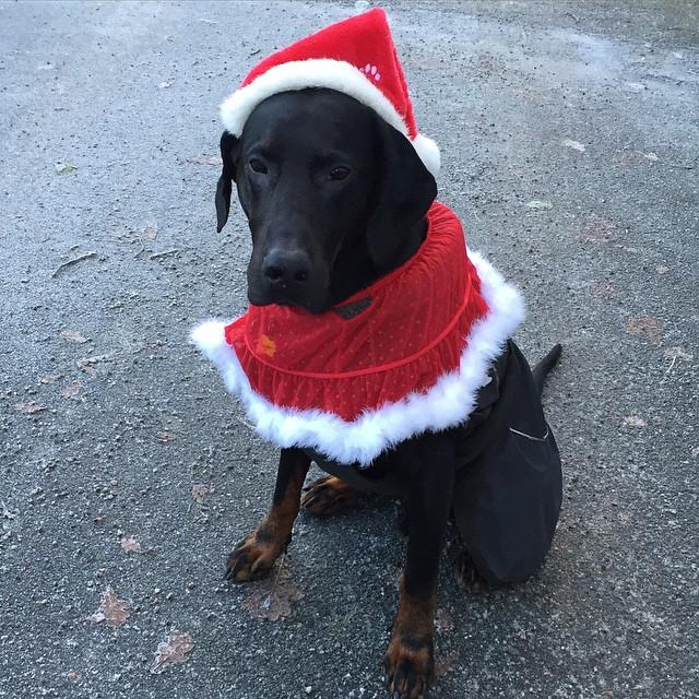 God Jul önskar Zeb med familj ! #leonlopez kramisar!