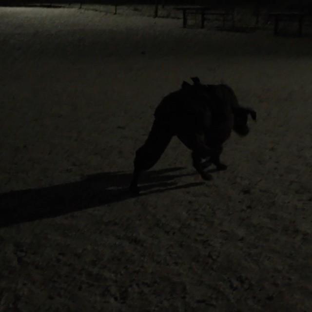 Rastar Leon #dobermann