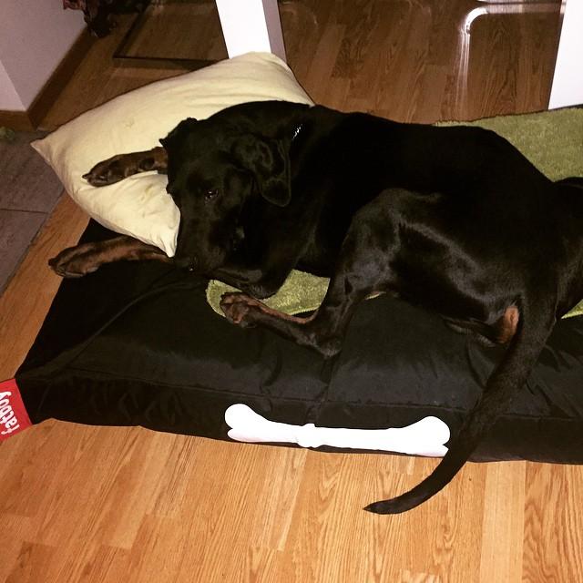 Now he can sleep :) #fatboydogbed #fatboy