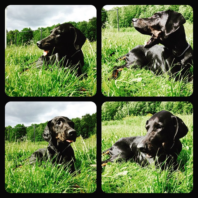 Jag har världens bästa kompis! #leon ! Vi har i allafall varandra :)